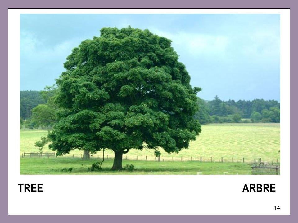 14 TREE ARBRE