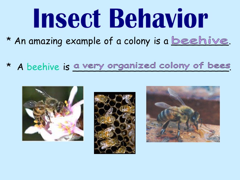* An amazing example of a colony is a __________. * A beehive is ___________________________.
