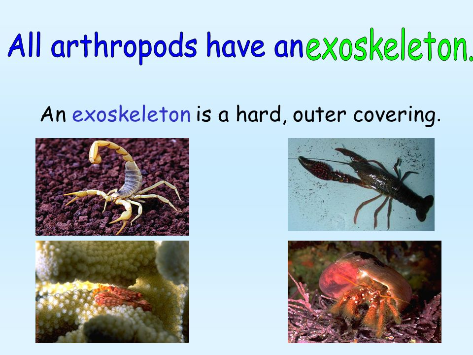 An exoskeleton is a hard, outer covering.