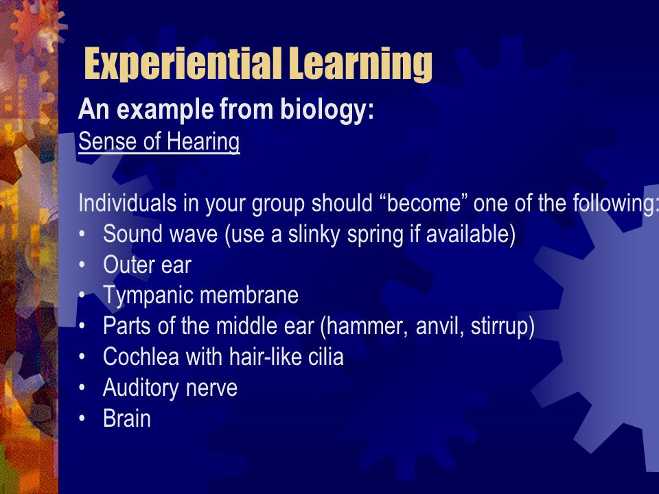 Experiential Learning An example from biology: Sense of Hearing Individuals in your group should become one of the following: Sound wave (use a slinky