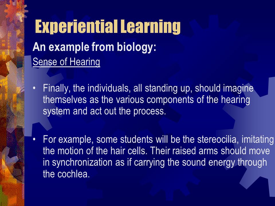 Experiential Learning An example from biology: Sense of Hearing Finally, the individuals, all standing up, should imagine themselves as the various co