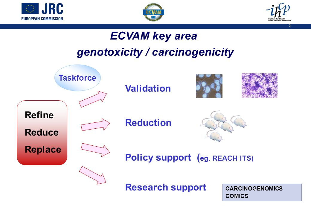 3 CARCINOGENOMICS COMICS ECVAM key area genotoxicity / carcinogenicity Validation Reduction Policy support ( eg. REACH ITS) Research support Refine Re