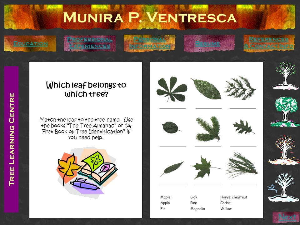 Tree Learning Centre Munira P. Ventresca Personal Information Education Professional Experiences References & Contact Info Resume Next Which leaf belo