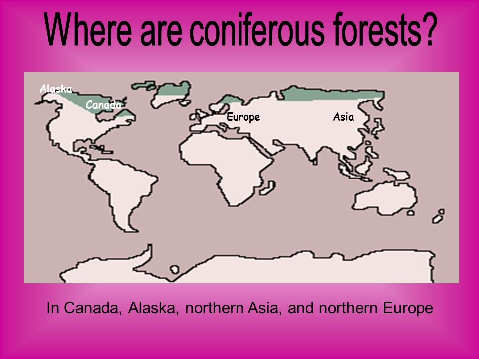 In Canada, Alaska, northern Asia, and northern Europe EuropeAsia Canada Alaska