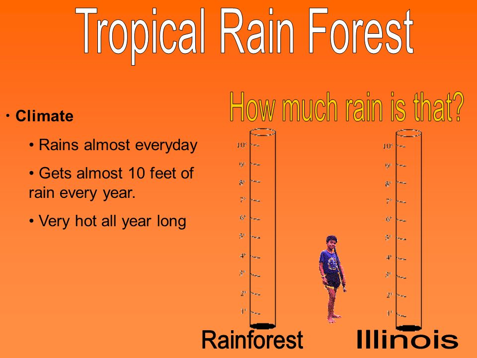 Climate Rains almost everyday Gets almost 10 feet of rain every year. Very hot all year long