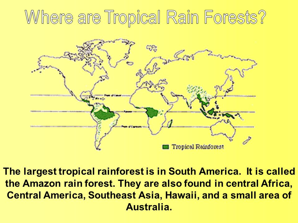 The largest tropical rainforest is in South America. It is called the Amazon rain forest. They are also found in central Africa, Central America, Sout