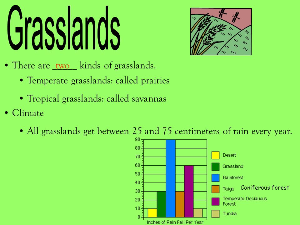 There are _____ kinds of grasslands.two Temperate grasslands: called prairies Tropical grasslands: called savannas Climate All grasslands get between