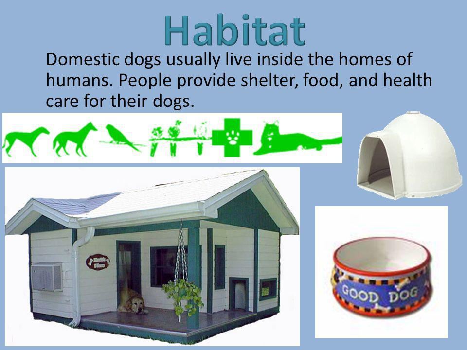 Domestic dogs usually live inside the homes of humans. People provide shelter, food, and health care for their dogs.