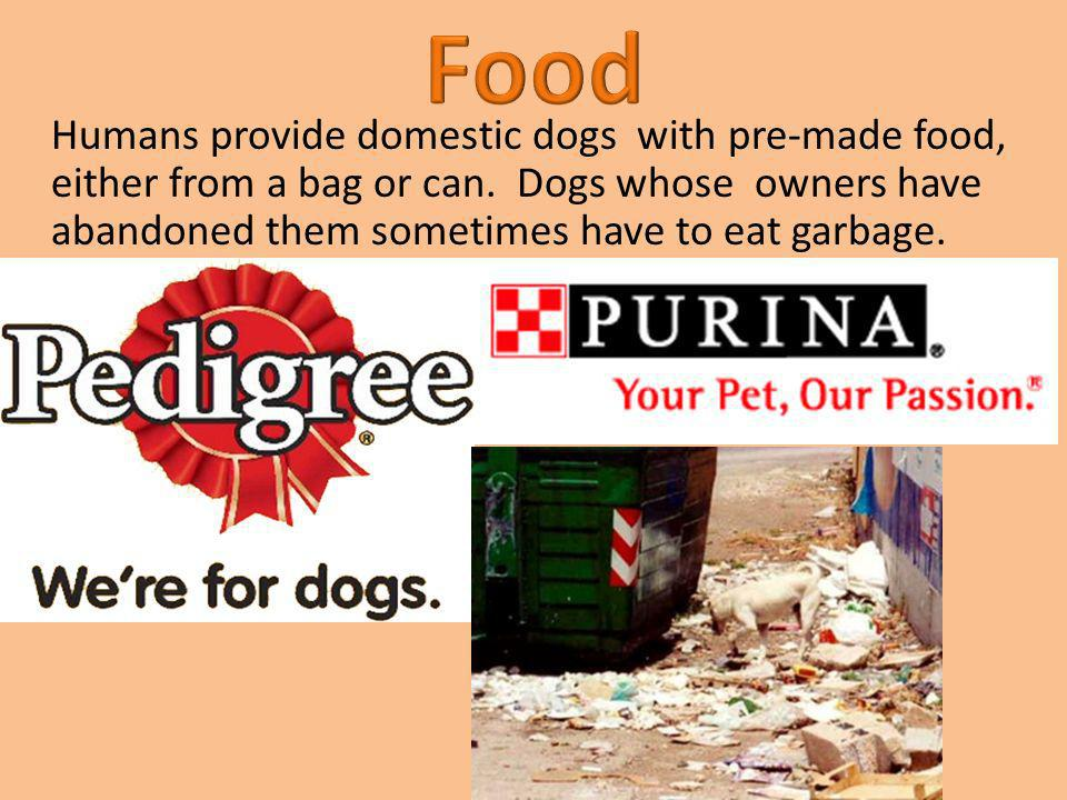 Humans provide domestic dogs with pre-made food, either from a bag or can. Dogs whose owners have abandoned them sometimes have to eat garbage.