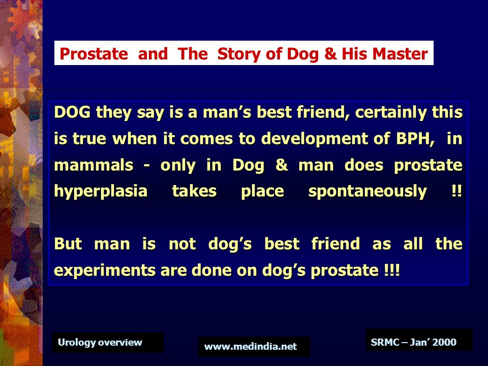 Urology overview www.medindia.net SRMC – Jan 2000 DOG they say is a mans best friend, certainly this is true when it comes to development of BPH, in m