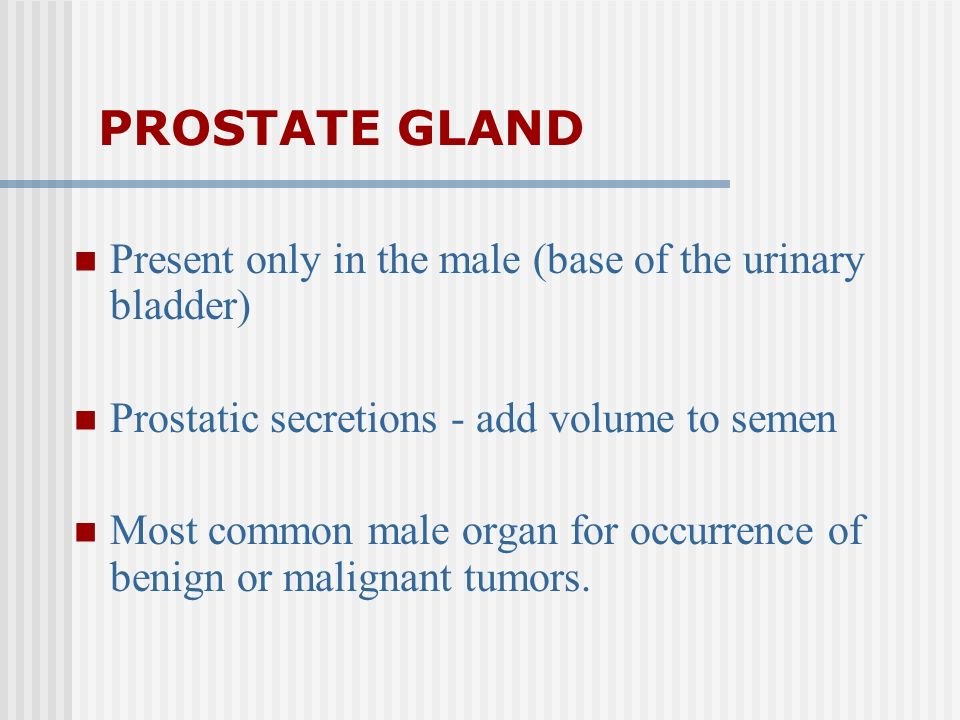 PROSTATE GLAND Present only in the male (base of the urinary bladder) Prostatic secretions - add volume to semen Most common male organ for occurrence