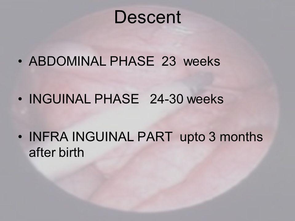 Descent ABDOMINAL PHASE 23 weeks INGUINAL PHASE 24-30 weeks INFRA INGUINAL PART upto 3 months after birth