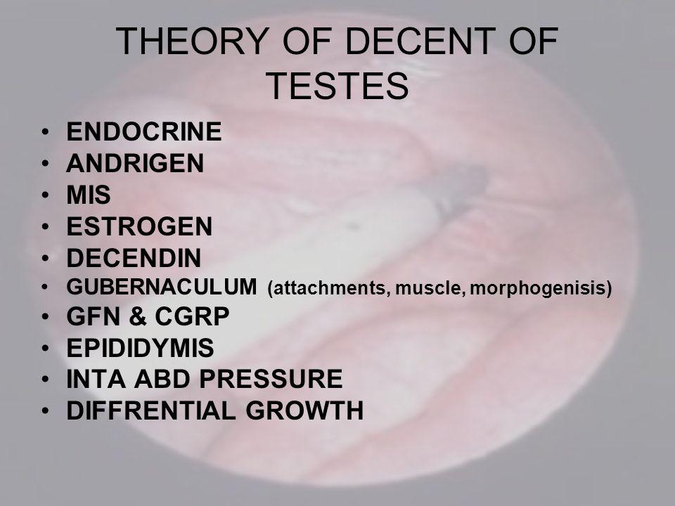 THEORY OF DECENT OF TESTES ENDOCRINE ANDRIGEN MIS ESTROGEN DECENDIN GUBERNACULUM (attachments, muscle, morphogenisis) GFN & CGRP EPIDIDYMIS INTA ABD P