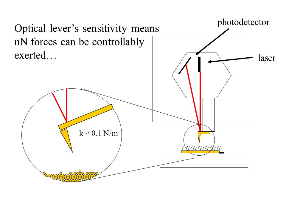 photodetector laser k 0.1 N/m Optical levers sensitivity means nN forces can be controllably exerted…