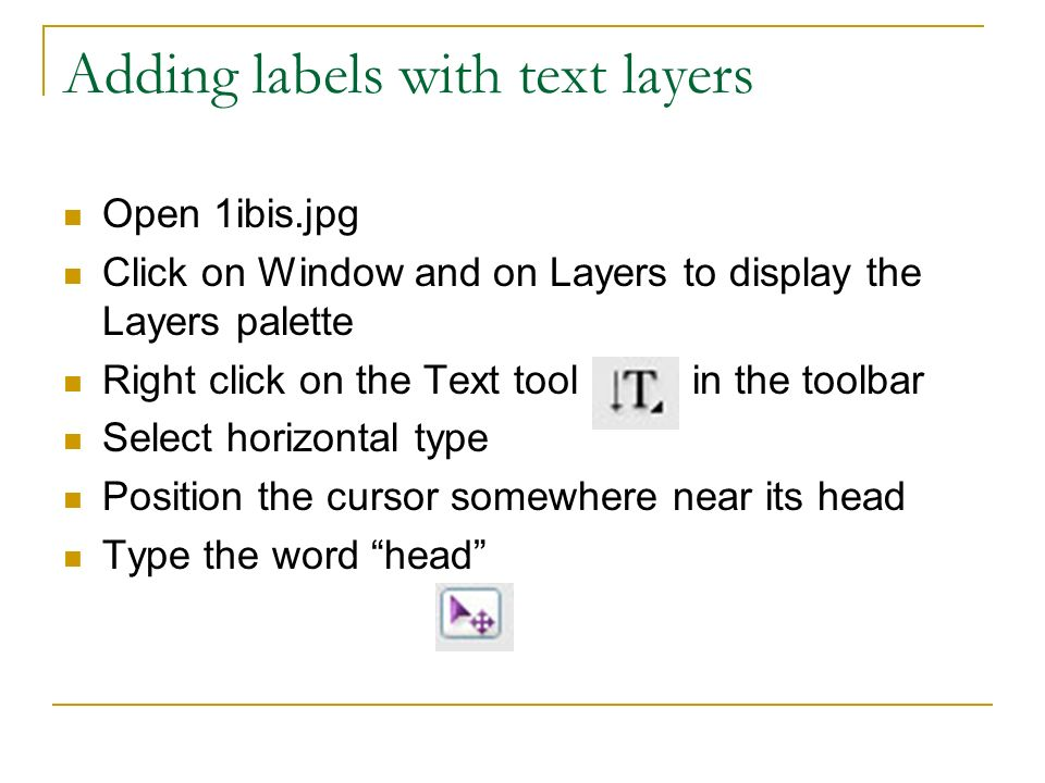 Adding labels with text layers Open 1ibis.jpg Click on Window and on Layers to display the Layers palette Right click on the Text tool in the toolbar Select horizontal type Position the cursor somewhere near its head Type the word head
