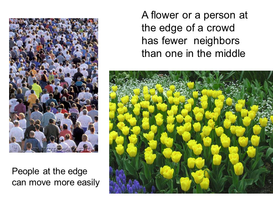 A flower or a person at the edge of a crowd has fewer neighbors than one in the middle People at the edge can move more easily