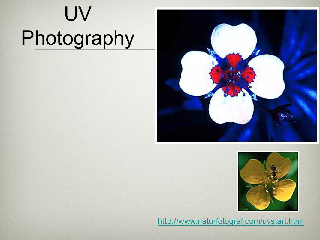 UV Photography http://www.naturfotograf.com/uvstart.html