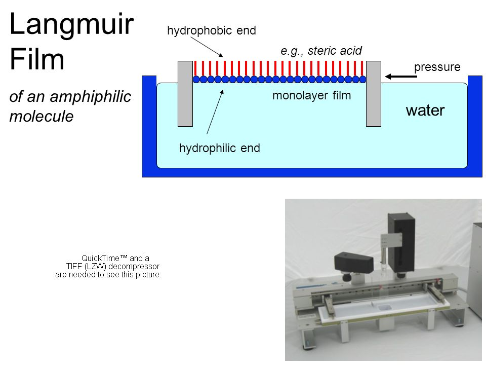 Langmuir Film pressure e.g., steric acid monolayer film water hydrophilic end hydrophobic end of an amphiphilic molecule