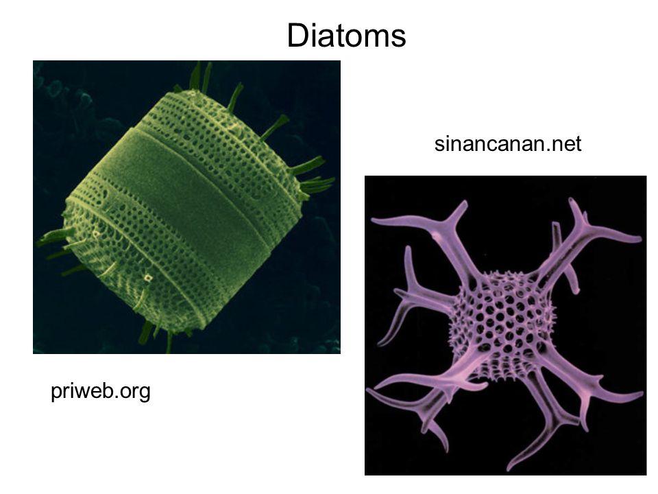 Diatoms priweb.org sinancanan.net