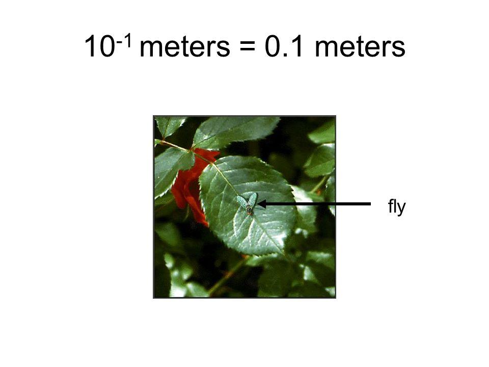 10 -1 meters = 0.1 meters fly