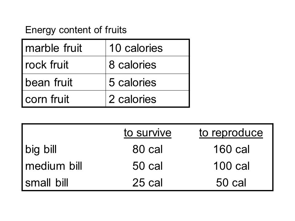 marble fruit10 calories rock fruit8 calories bean fruit5 calories corn fruit2 calories to surviveto reproduce big bill80 cal160 cal medium bill50 cal100 cal small bill25 cal50 cal Energy content of fruits