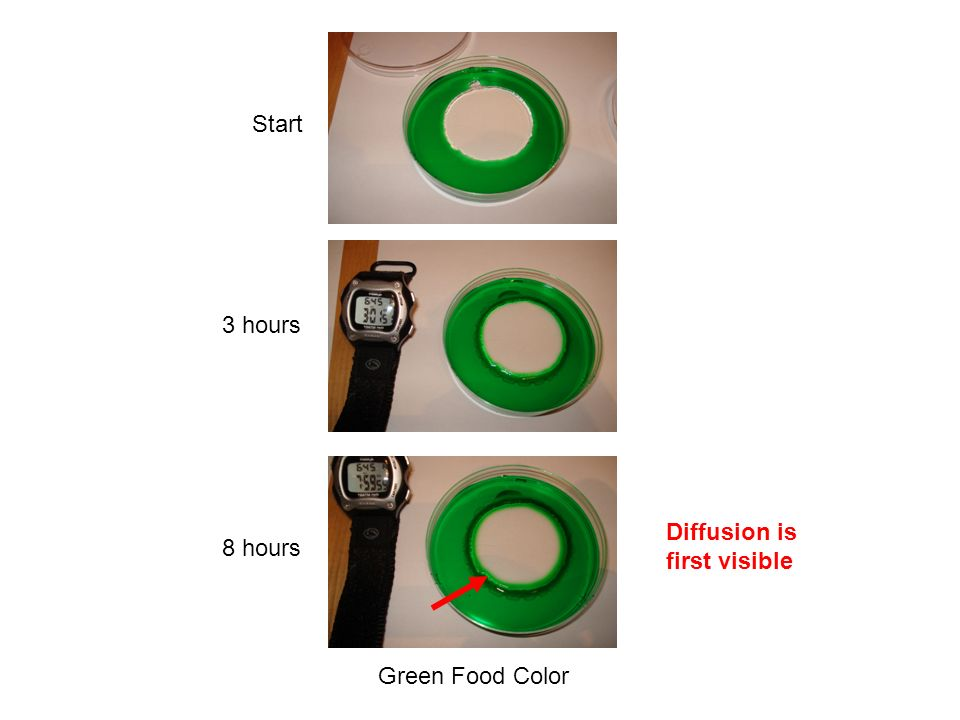 Start 3 hours 8 hours Green Food Color Diffusion is first visible
