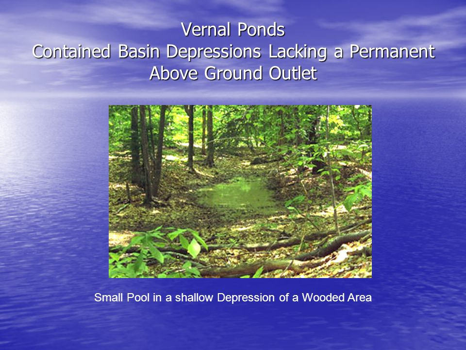Vernal Ponds Contained Basin Depressions Lacking a Permanent Above Ground Outlet Small Pool in a shallow Depression of a Wooded Area