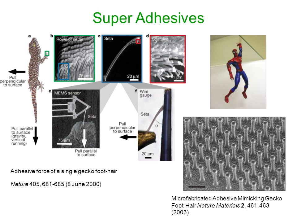 Super Adhesives Adhesive force of a single gecko foot-hair Nature 405, 681-685 (8 June 2000) Microfabricated Adhesive Mimicking Gecko Foot-Hair Nature Materials 2, 461-463 (2003)