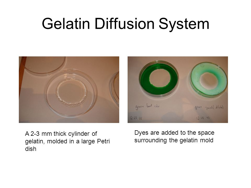 Gelatin Diffusion System A 2-3 mm thick cylinder of gelatin, molded in a large Petri dish Dyes are added to the space surrounding the gelatin mold