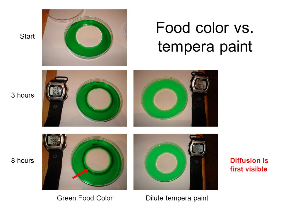 Food color vs. tempera paint Start 3 hours 8 hours Green Food ColorDilute tempera paint Diffusion is first visible