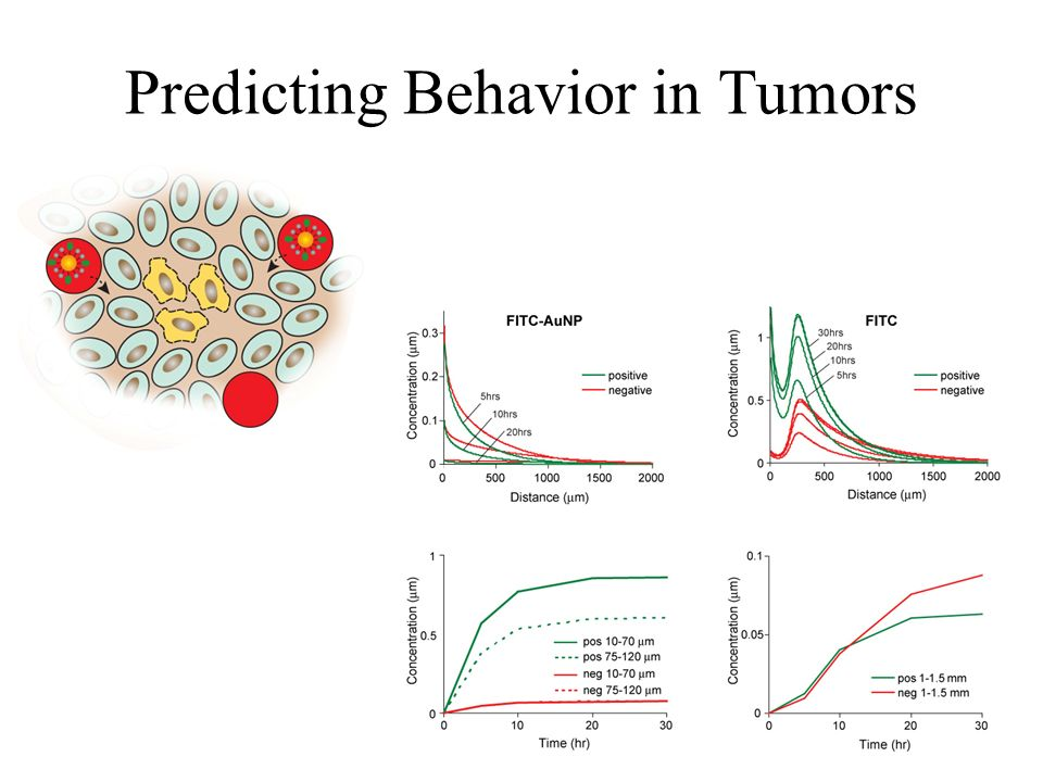 Predicting Behavior in Tumors