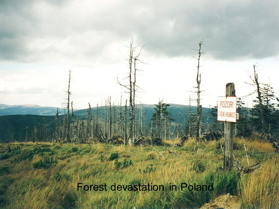 Forest devastation in Poland