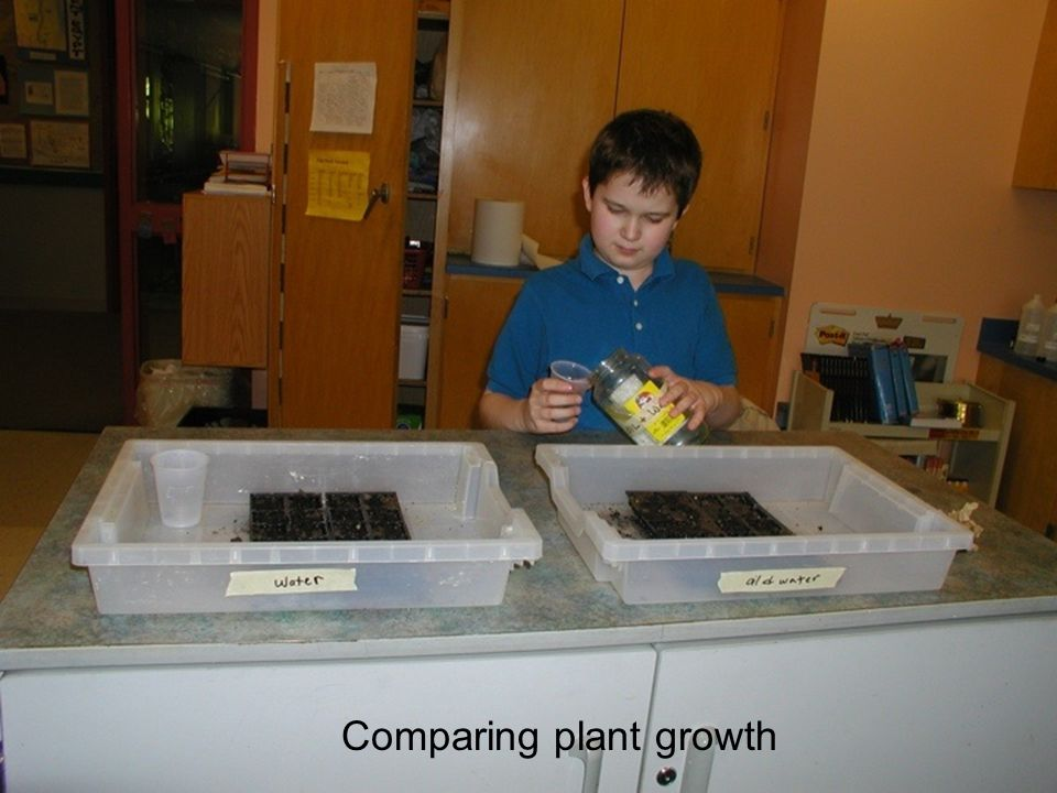 Comparing plant growth