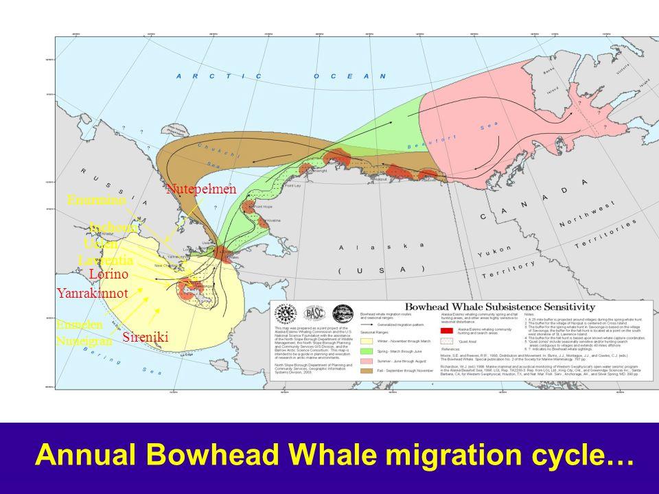 Enurmino Inchoun Uelen Lavrentia Yanrakinnot Sireniki Enmelen Nuneigran Nutepelmen Lorino Annual Bowhead Whale migration cycle…