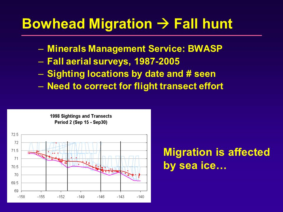Bowhead Migration Fall hunt –Minerals Management Service: BWASP –Fall aerial surveys, 1987-2005 –Sighting locations by date and # seen –Need to correct for flight transect effort Migration is affected by sea ice…