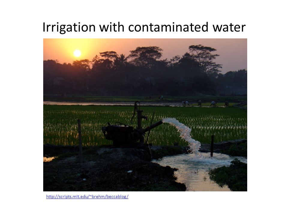 Irrigation with contaminated water