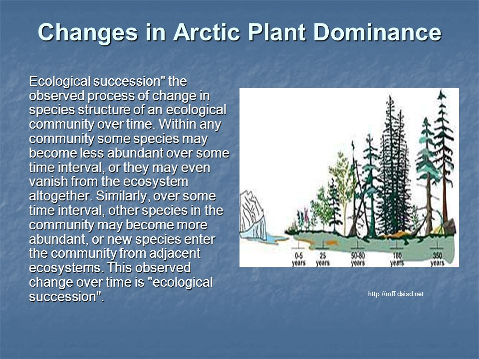 Changes in Arctic Plant Dominance Ecological succession