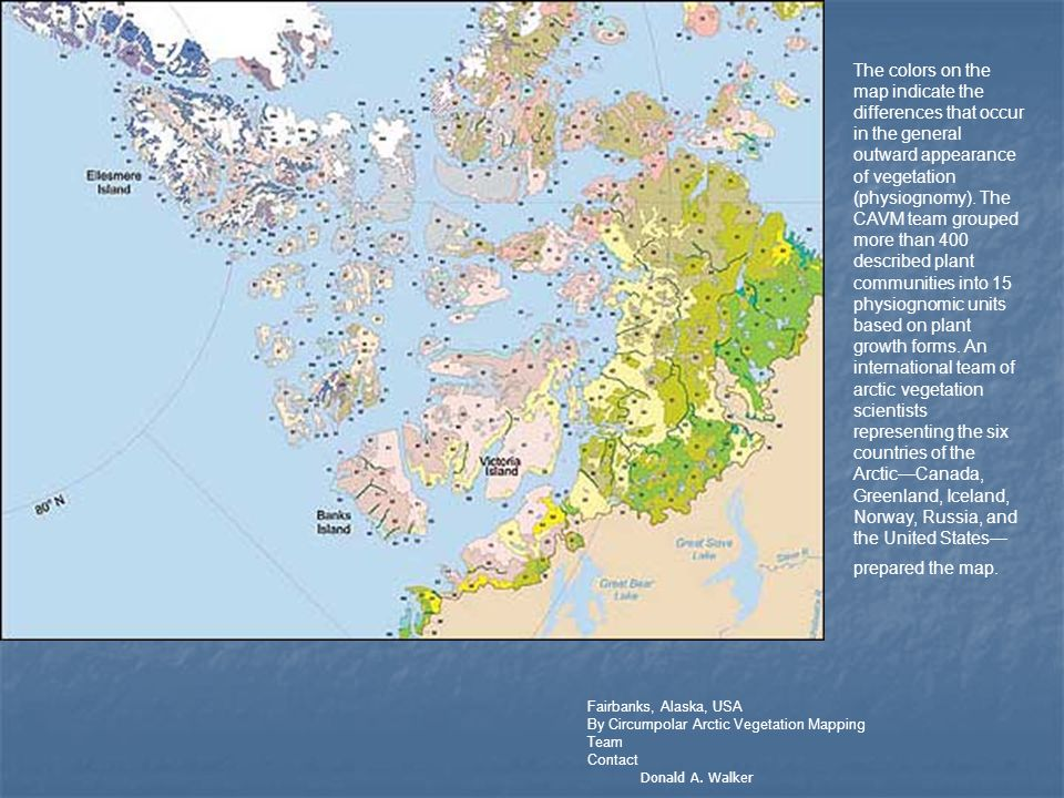 Fairbanks, Alaska, USA By Circumpolar Arctic Vegetation Mapping Team Contact Donald A. Walker The colors on the map indicate the differences that occu