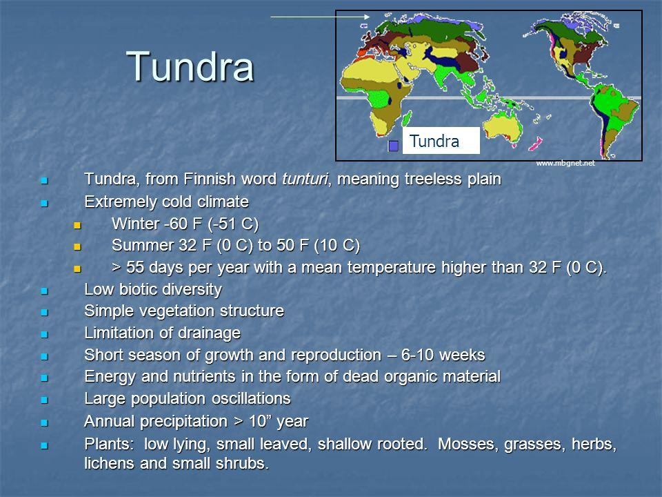 Tundra Tundra, from Finnish word tunturi, meaning treeless plain Tundra, from Finnish word tunturi, meaning treeless plain Extremely cold climate Extr