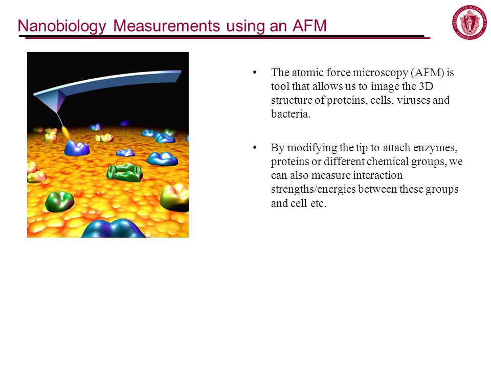 The atomic force microscopy (AFM) is tool that allows us to image the 3D structure of proteins, cells, viruses and bacteria.