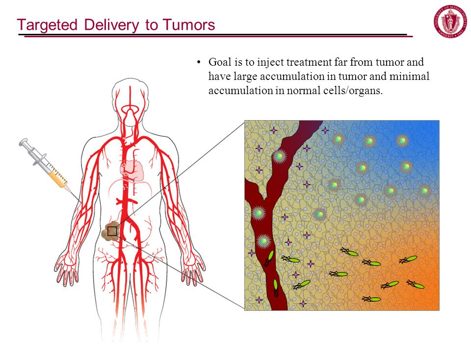 Targeted Delivery to Tumors Goal is to inject treatment far from tumor and have large accumulation in tumor and minimal accumulation in normal cells/organs.
