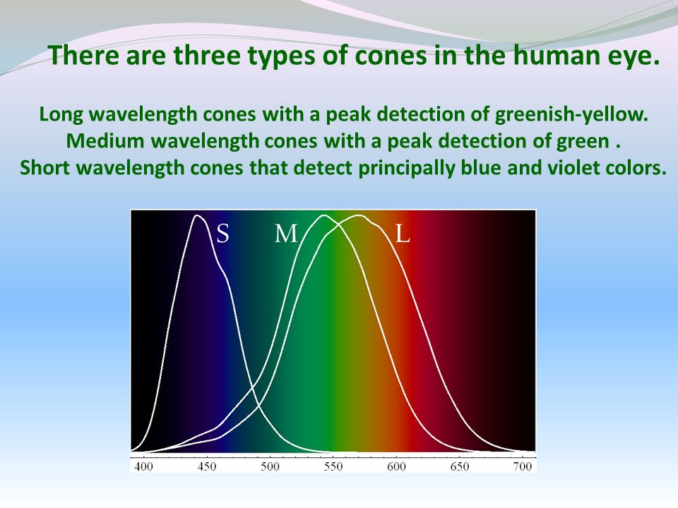 There are three types of cones in the human eye. Long wavelength cones with a peak detection of greenish-yellow. Medium wavelength cones with a peak d