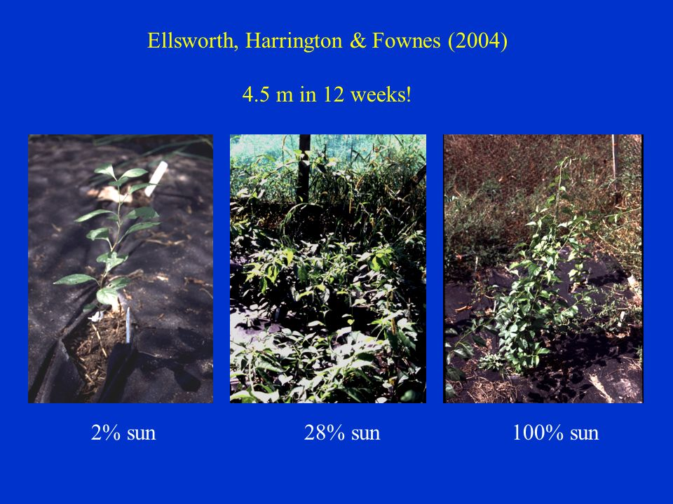 2% sun28% sun100% sun Ellsworth, Harrington & Fownes (2004) 4.5 m in 12 weeks!