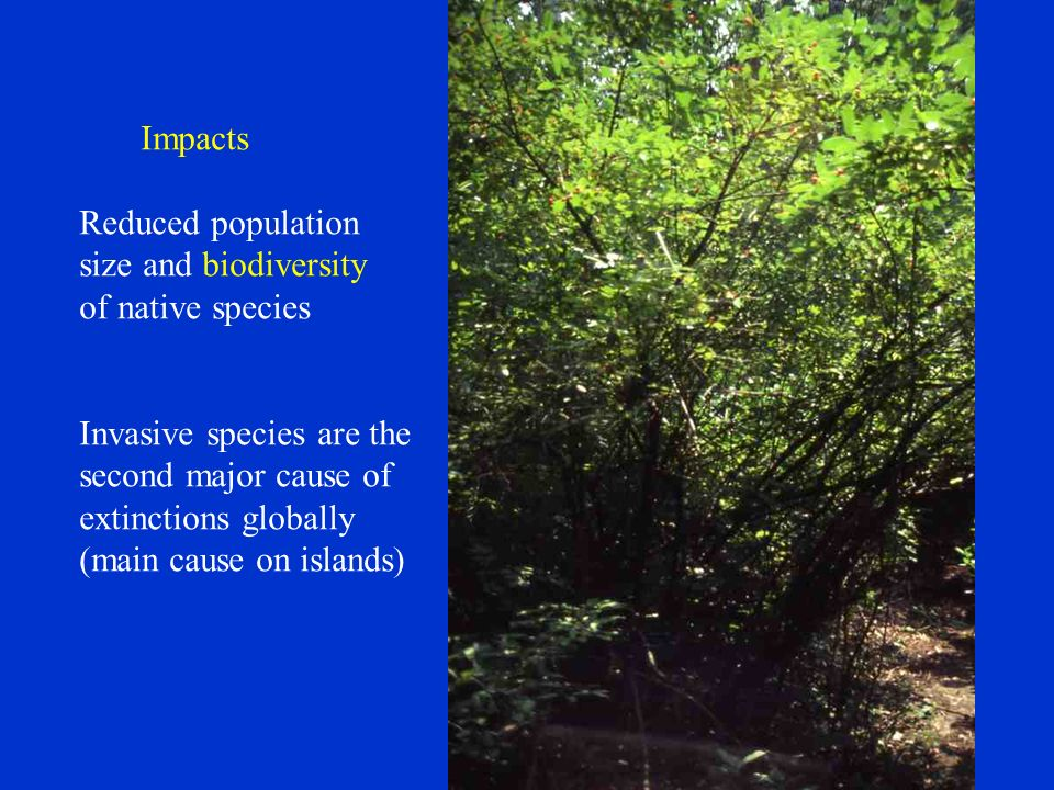 Impacts Reduced population size and biodiversity of native species Invasive species are the second major cause of extinctions globally (main cause on islands)