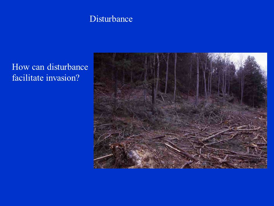 Disturbance How can disturbance facilitate invasion