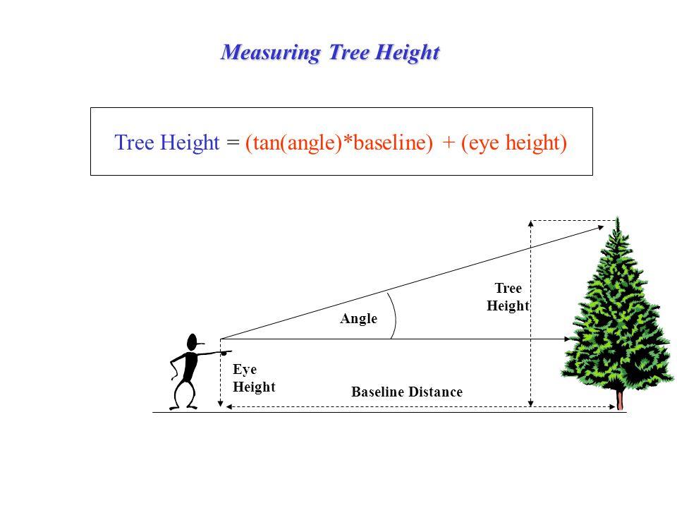 Measuring Tree Height Tree Height Angle Baseline Distance Tree Height = (tan(angle)*baseline) + (eye height) Eye Height