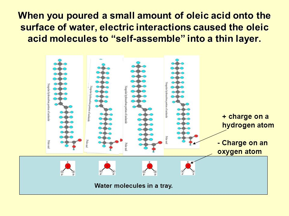 When you poured a small amount of oleic acid onto the surface of water, electric interactions caused the oleic acid molecules to self-assemble into a