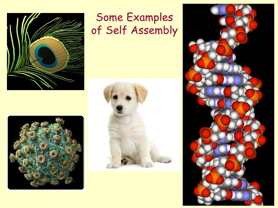 Some Examples of Self Assembly