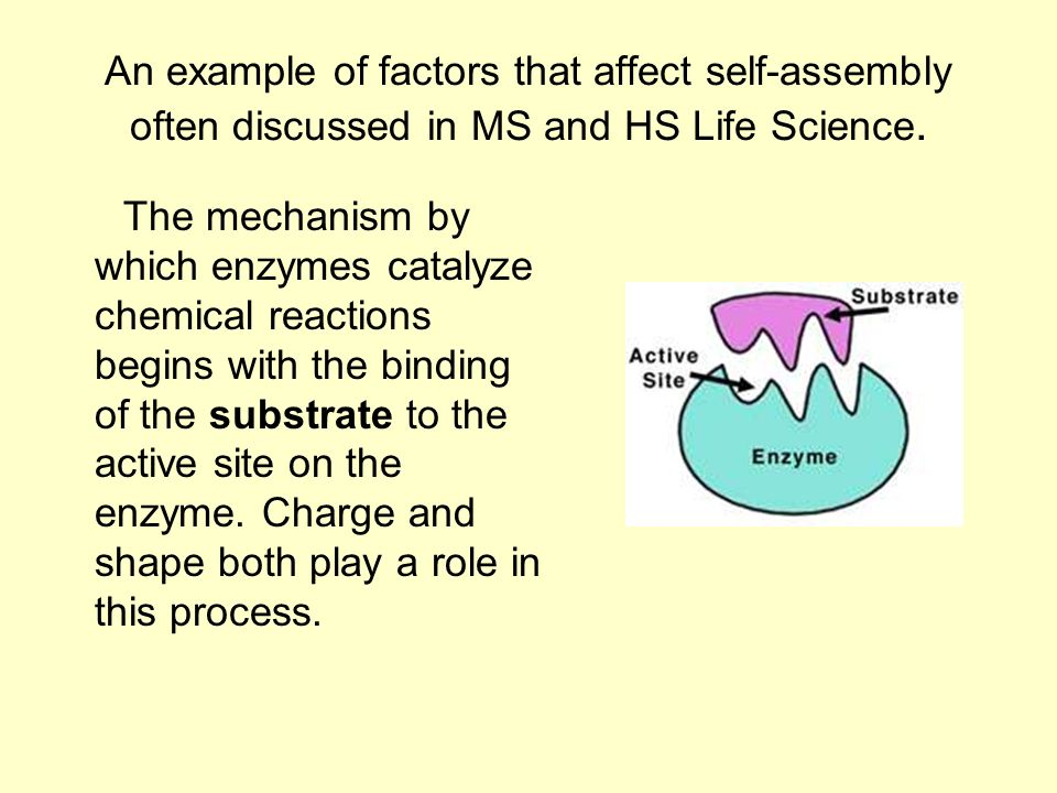 An example of factors that affect self-assembly often discussed in MS and HS Life Science.