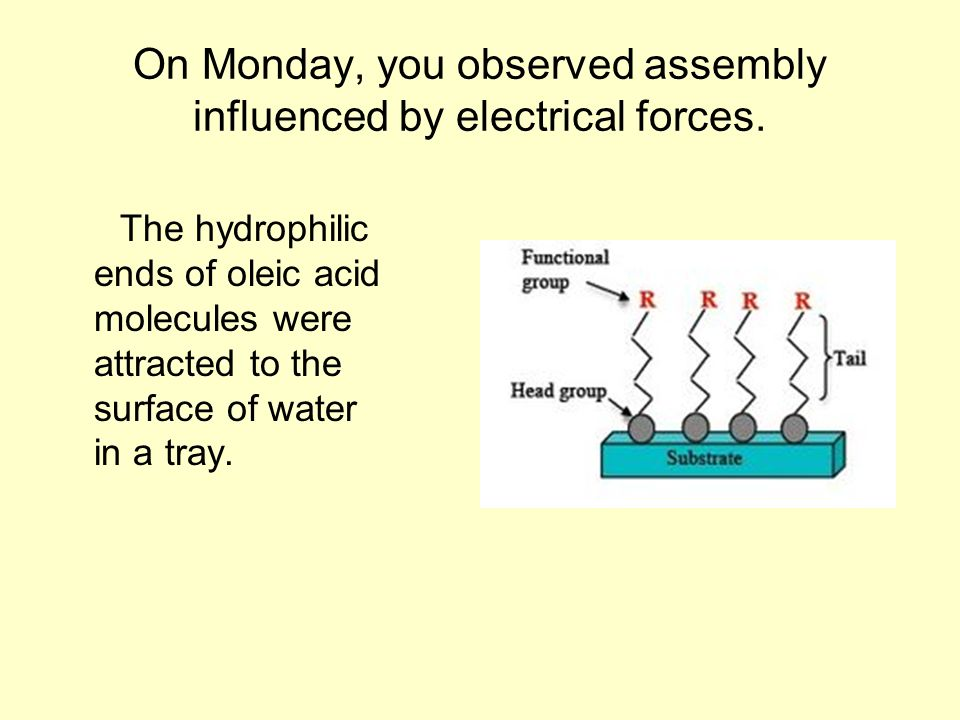 On Monday, you observed assembly influenced by electrical forces.
